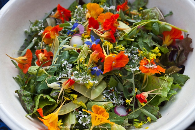 Mesclun and edible flowers salad