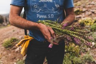 Hall Newbegin, Sierra Granite harvest, August 2014. Credit: Juniper Ridge.