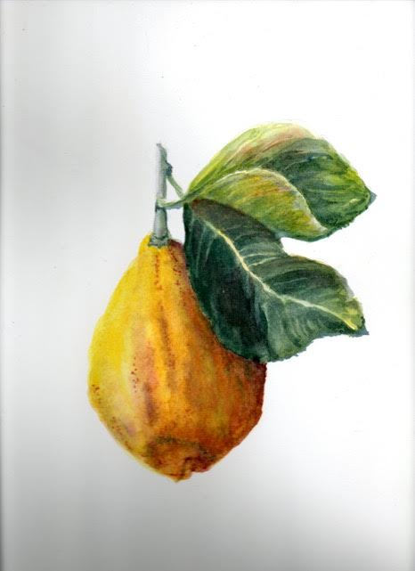 Watercolor painting of Meyer lemon by Ms. Boate.