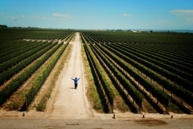 WofW vineyard