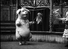 Dancing Pig.1.jpg