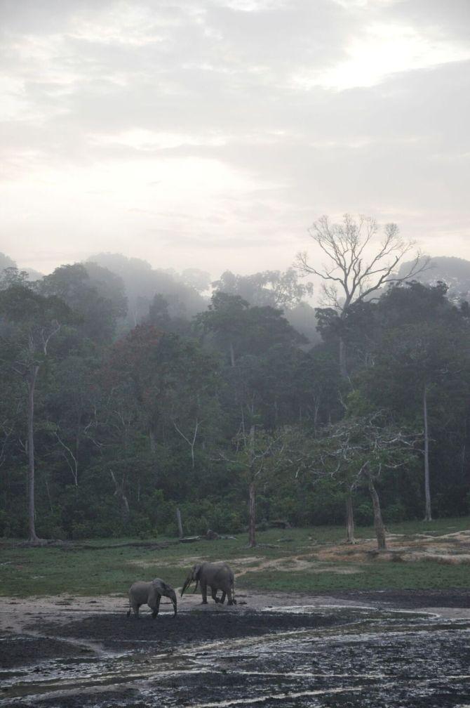 Dzanga Bai - forest clearing in Dzanga-Ndoki Natnl Park 2_preview