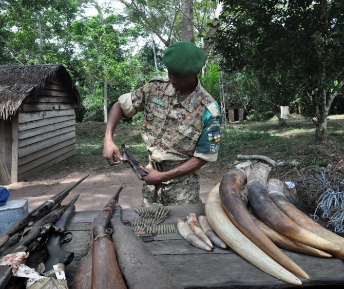Zephirine Mbele with confiscated weapons and ivory