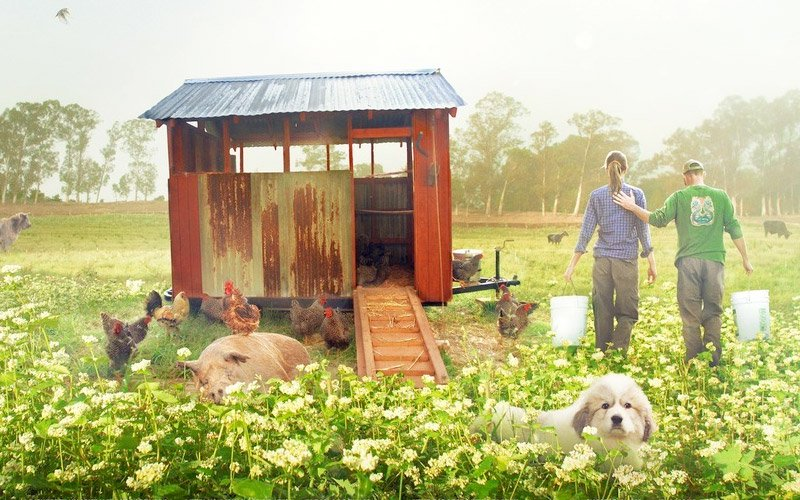 BIGGEST SHED AND ANIMALS.jpg