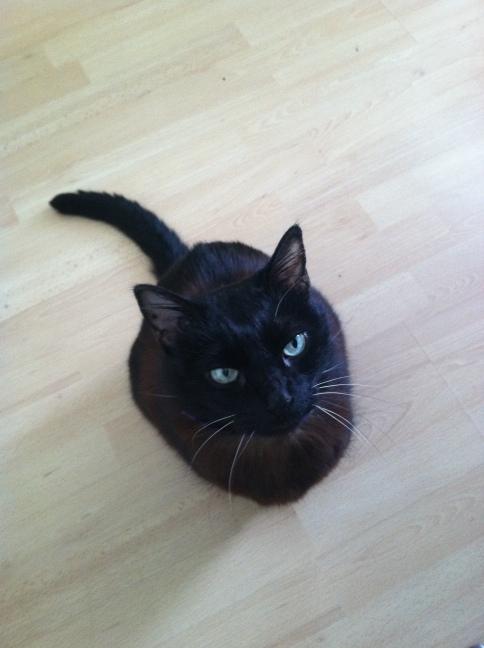 4 Cixous Black Cat.jpg