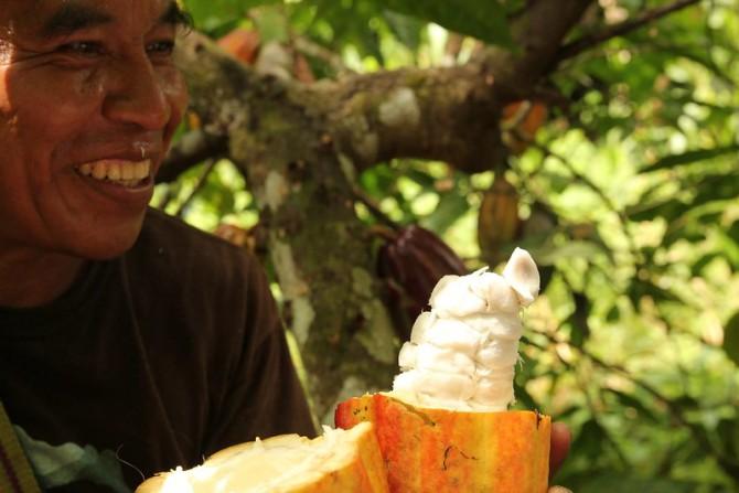 12 cocoa pod open.jpg