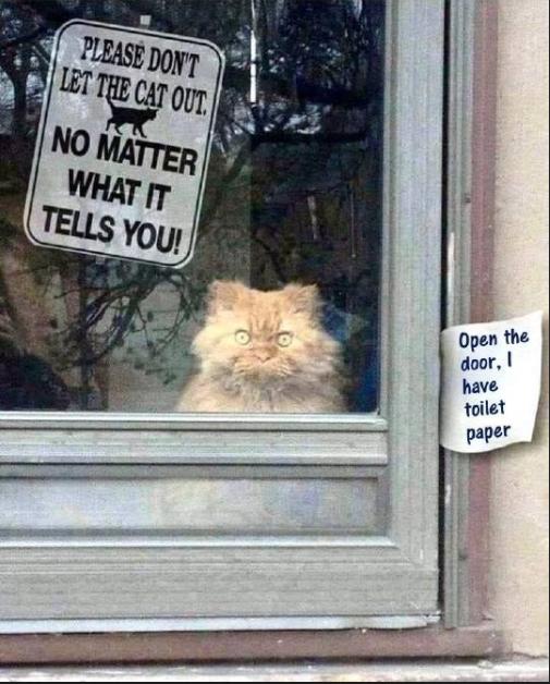 cat toilet paper.png